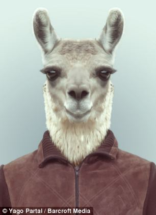 The llama is dressed in a simple brown jacket