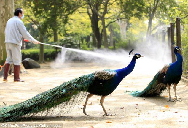 A health worker sprays disinfectant at bird area of Shanghai Zoo
