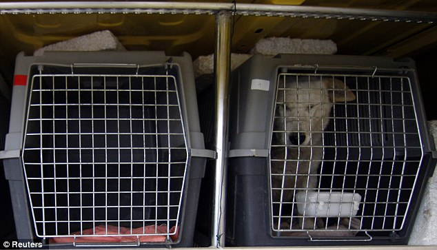 Locked up: The rescue center saves as many as 100 dogs from puppy mills every month (file picture)