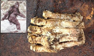 Is this giant, decomposed foot evidence of the existence of Sasquatch?