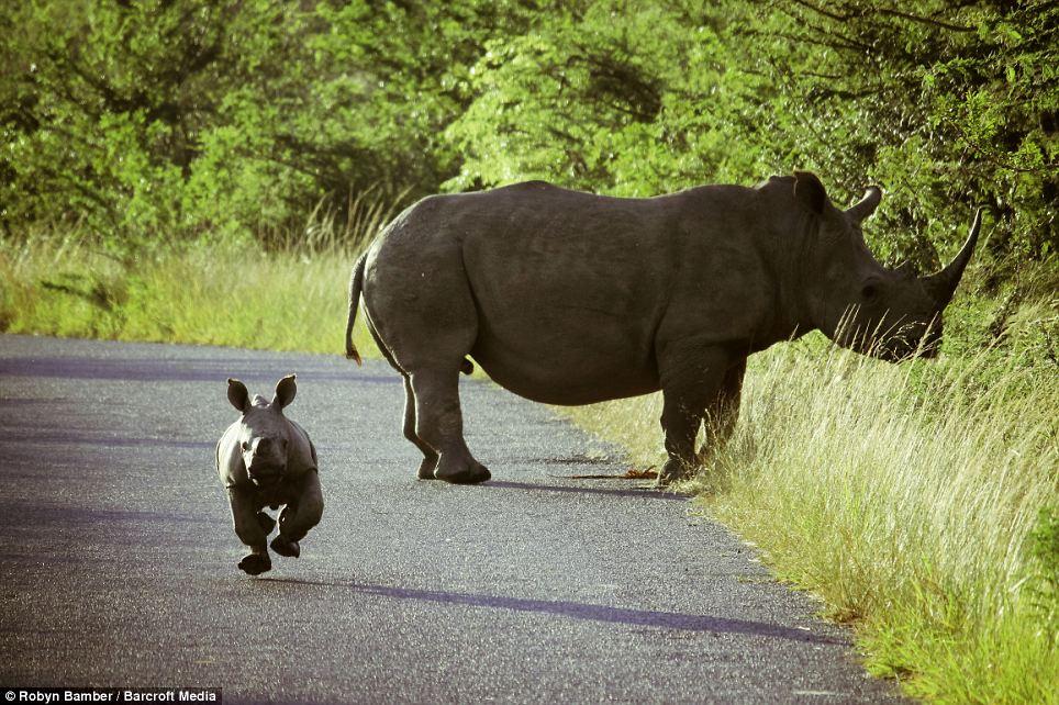 Safari And Guide Black White