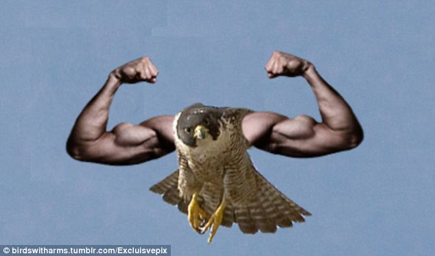Birds With Arms Migrate Back Onto The Internet Meme Radar As