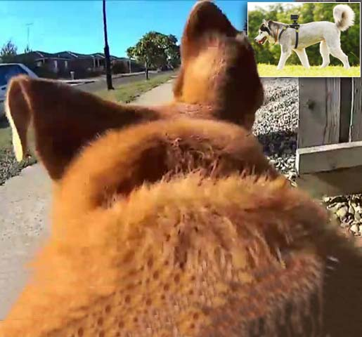 The pooch perspective: The camera that reveals where your dog REALLY goes when you let it off the lead