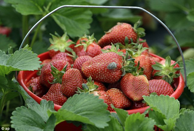 'Tis the season: Strawberries are ripe and ready for the picking in North Carolina where the state is enjoying perfect spring temperatures