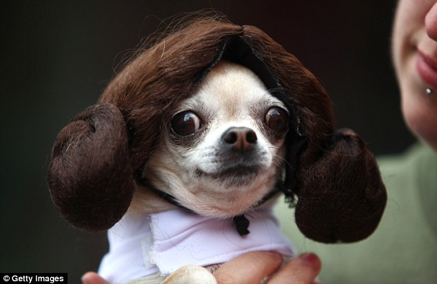 sci fido dogs at dressed as characters from star wars doctor who and