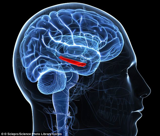 Vital component: The scientists have been looking into the hippocampus - the part of the brain that is vital in forming long-term memories (in red) - for around a decade