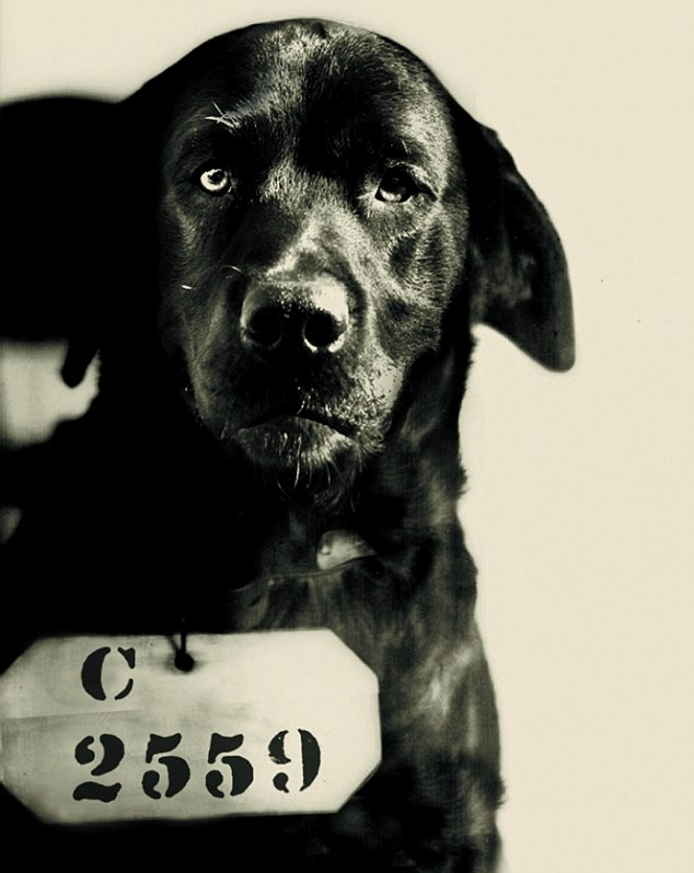 Falsely accused: Pep 'The Cat-Murdering Dog' in his prison mugshot after being admitted to Eastern State Penitentiary