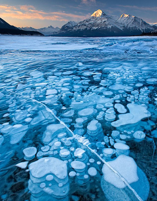 Dangerous beauty: Highly flammable but trapped in ice, methane gas bubbles wind their way to the surface of Abraham Lake in Alberta, Canada
