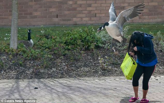 A frightened girl hangs on to her shopping as she runs past the protected nest