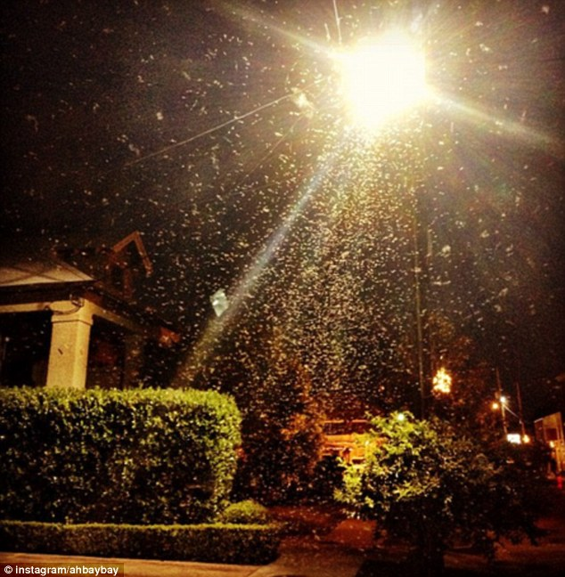 Critters be Crawling: The Formosan termites flew across the New Orleans area in their tens of thousands last night