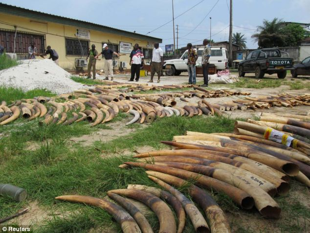 Elephants are increasingly at risk due to high demand for ivory from Asia, experts have said (file photo)