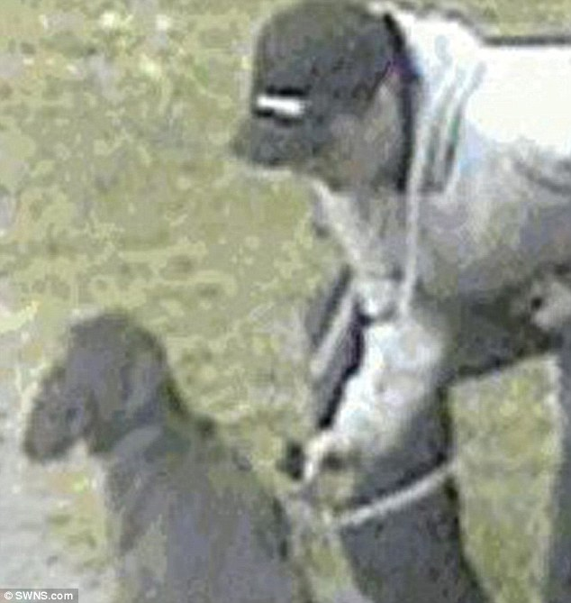 Thug Who Kicked And Punched His Staffordshire Bull Terrier