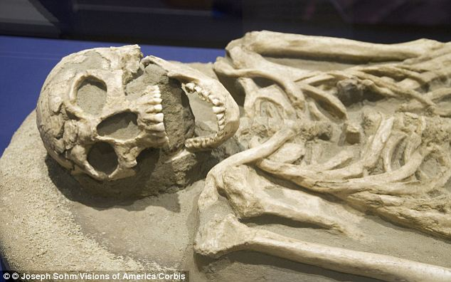 Mystery man: It is now thought that Harrison died in 1624 in a duel. The skeleton was uncovered in 1996, but known only as JR102C for 17 years