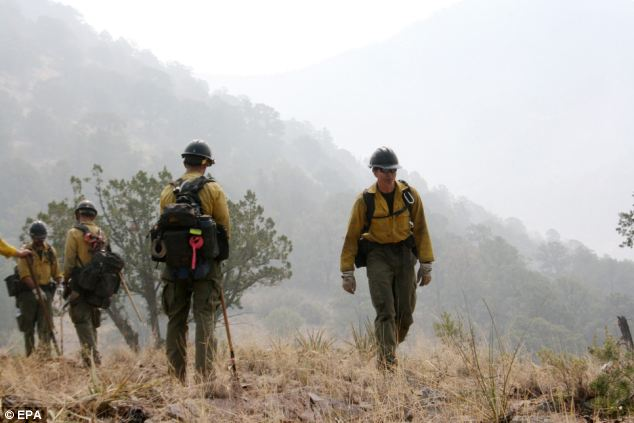 Experts: Members of the Granite Mountain Hotshots work on a ridge line in Mogollon, New Mexico last June