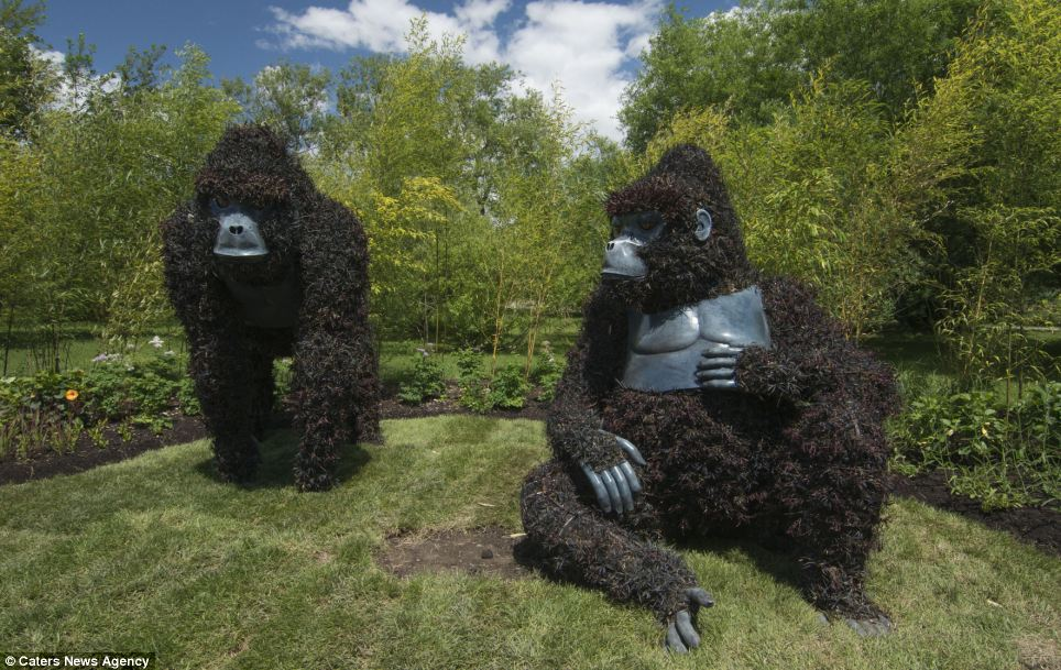 These hulking gorillas are made from living and growing plants with their chests, hands, feet and faces moulded out of plastic as an addition to the design