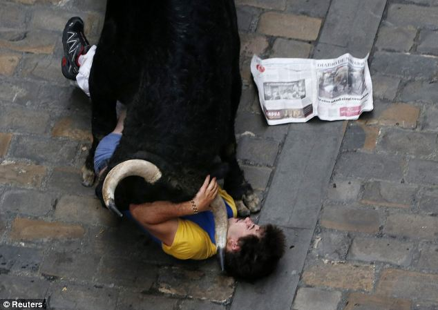Trapped: The man is caught between the horns of an El Pilar fighting bull after being gored