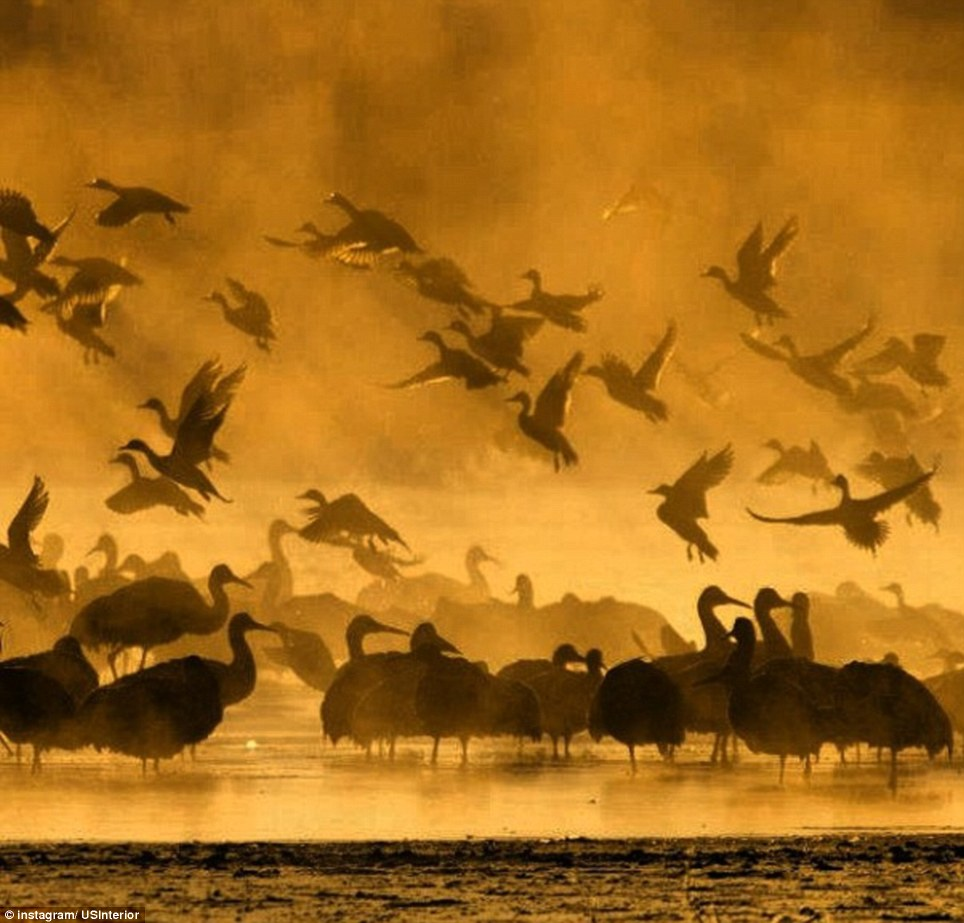 New Mexico: Birds take flight in the wetlands of the Bosque del Apache Wildlife Refuge