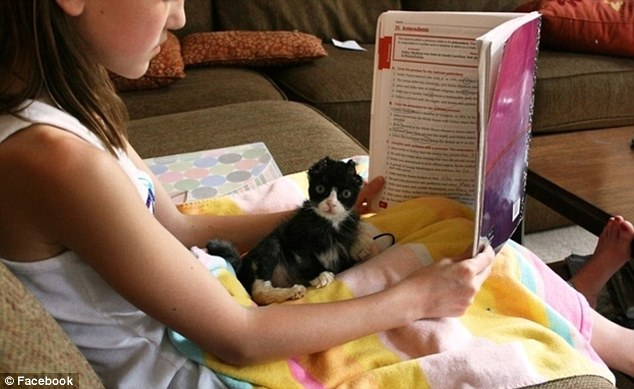 Educational: The playful kitty takes a break from fun and games to squeeze in some reading