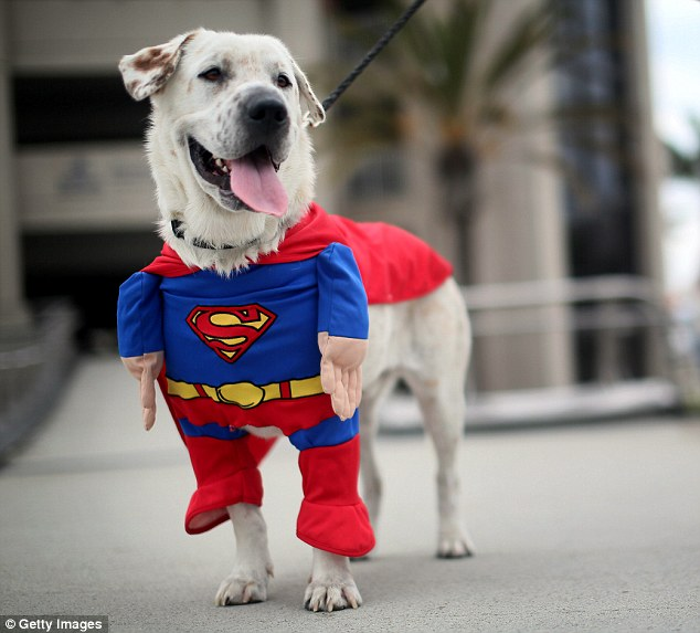 Dog of Steel: Beckham the dog sports a Superman costume during Comic Con 2013