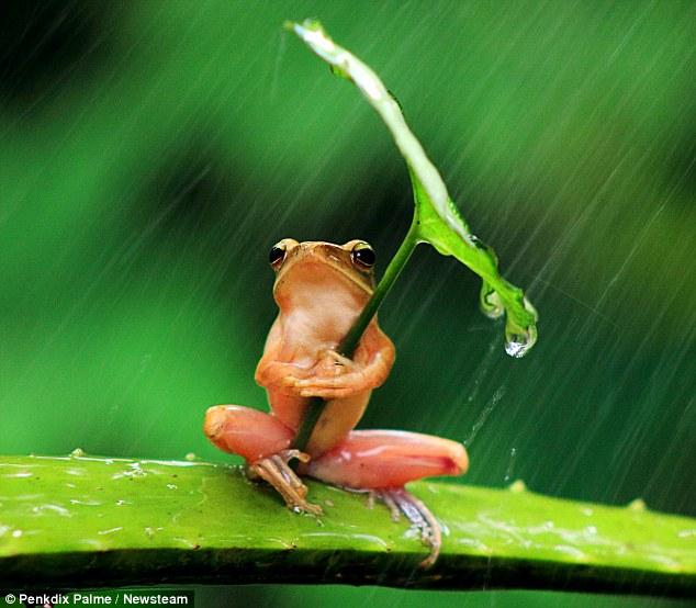 penampakan katak menggunakan payung