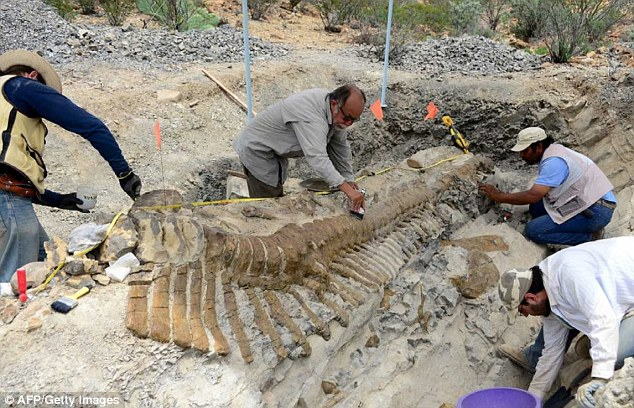 Precision: Archaeologists painstakingly excavate the tail