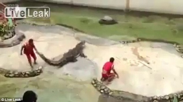 Crocodile farm: Miraculously, the trainer escaped unharmed after his brush with death in Bangkok
