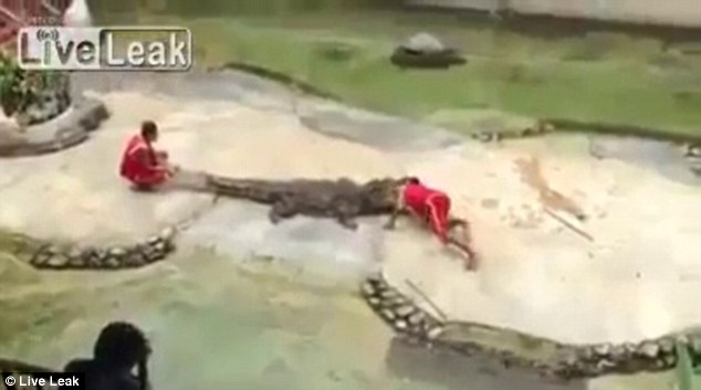 Horror: The screams of the audience are audible as the crocodile clamps its jaws shut with the trainer's head inside