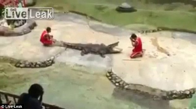 Silent prayer: The trainer was seen bowing his head before the crocodile ahead of performing the daring trick