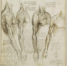 da vinci human anatomy drawings ile ilgili görsel sonucu