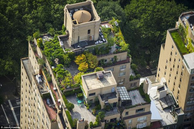 Urban jungle: A tree-topped building in Manhattan's Upper East Side looks down on even more trees in Central Park