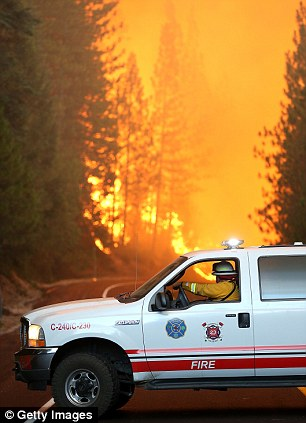 A Murphys Fire District firefighter stops his vehicle as a massive wall of fire from the Rim Fire consumes trees along highway 120