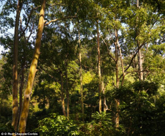 Planting Under Eucalyptus Trees : October wicked thoughts