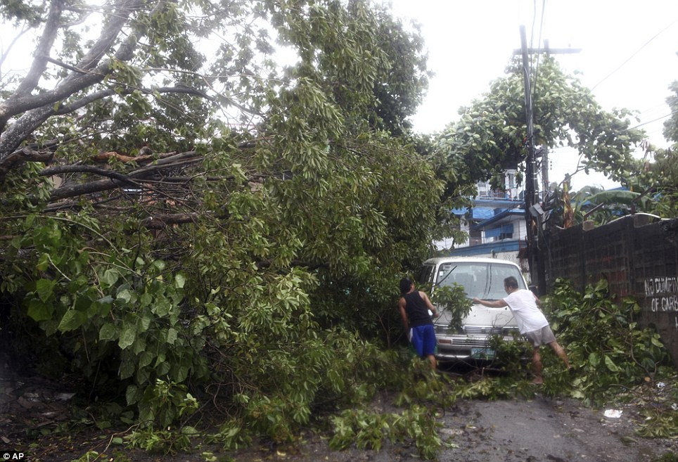 Blocked: Residents clear the road in the island province of Cebu after a tree was toppled by strong winds during typhoon Haiyan