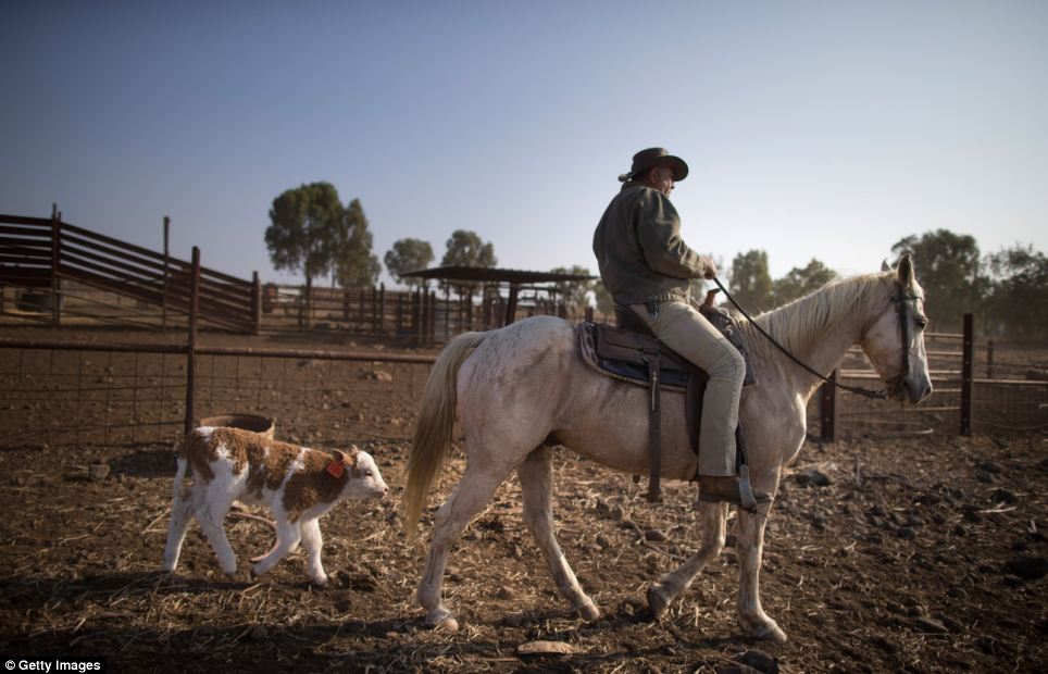 The cowboys live and work amid tensions with neighbour Syria