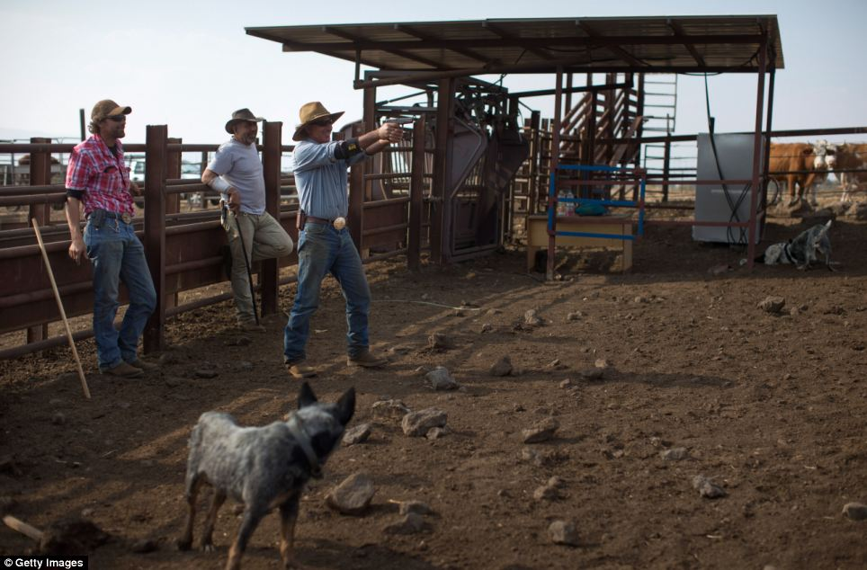 Just like a scene from the Wild West, the cowboys practice with guns at the Merom Golan ranch