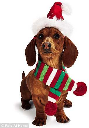 Pet Gift Guide The Best Christmas Presents For Dogs And