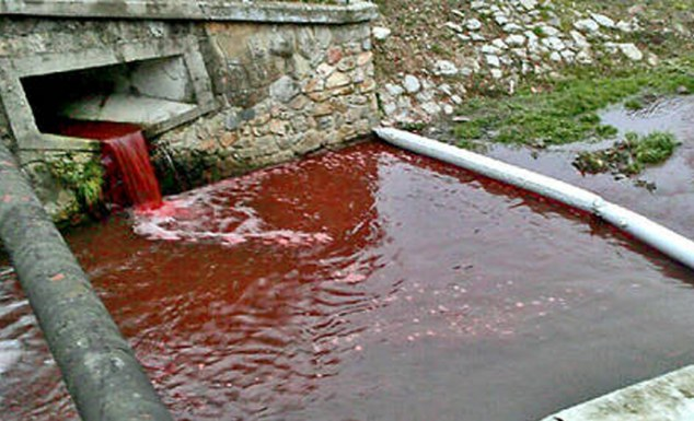 Riverrun: Residents in the small town of Myjava in Slovakia awoke to a river red as blood