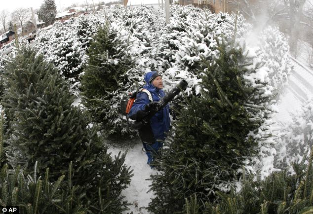 Perseverance: Jim Cline removes the snow from Christmas trees for shoppers in Indianapolis