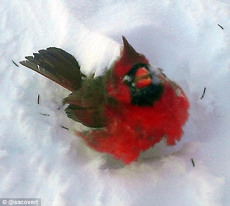 A frozen bird was pictured in a backyard in Lafayette, Indiana as the temperature dropped to -13F