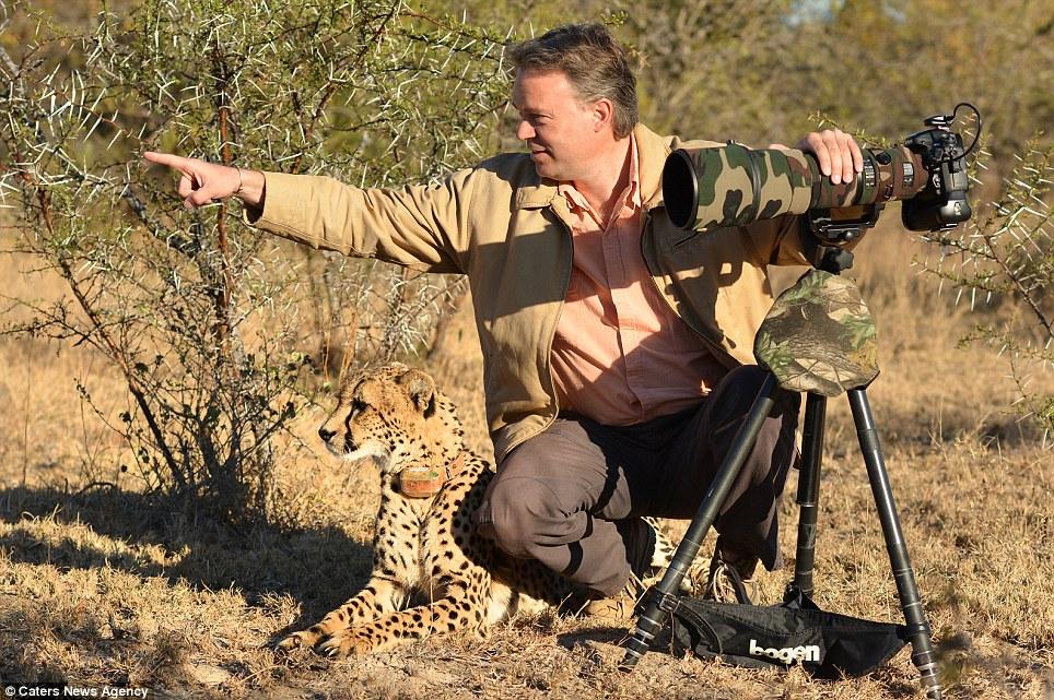 Apunta y dispara: el Sr. Du Plessis llama la atención del guepardo a algo en la distancia