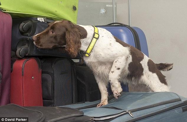 Image result for Drug Sniffer Dogs Detection