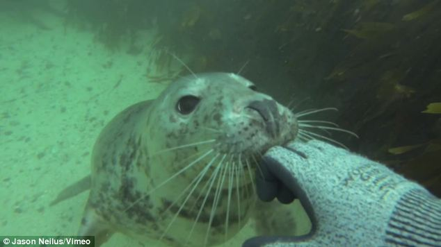 Nibble: This cheeky pup appears to be nibbling on the diver's glove