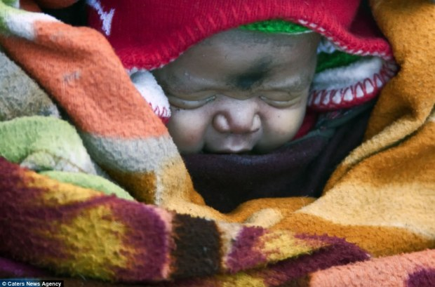 Latest addition: The newborn baby is wrapped up warm for the nine-day journey back to their home town in Ladakh, Northern India