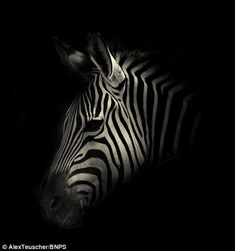 Black And White Rhino Portrait