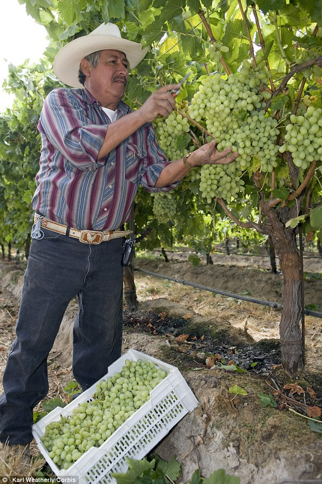 Concerns: California's $61 billion a year wine industry may suffer if it loses access to vital water for next year's crop