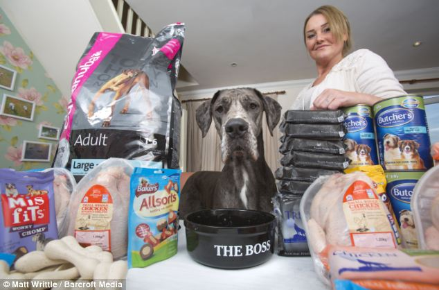 IN order to fuel his huge bulk, Freddy eats his way through £75 worth of regular dog food per week