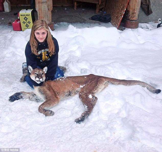Fearless: Shelby White, 11, is posing with a cougar she shot dead last week on her grandfather's property