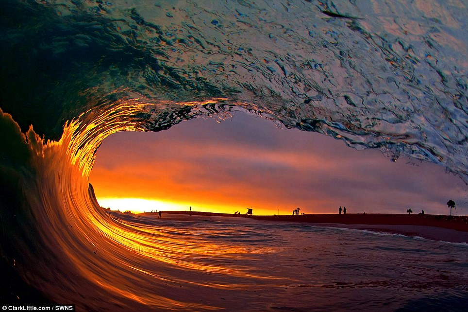 Mr Little looks out of a glassy California barrel during sunset on Newport Beach in California