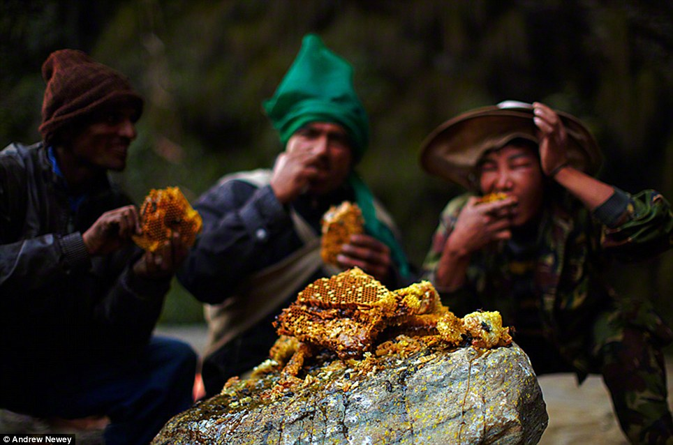 At the end of a hard days harvesting the Gurung men tuck into the wild honey for some much needed energy