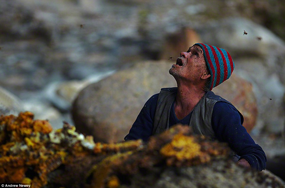 One of the Gurung men watches from the base of the cliff as the cutter repositions himself on the rope ladder 200ft above